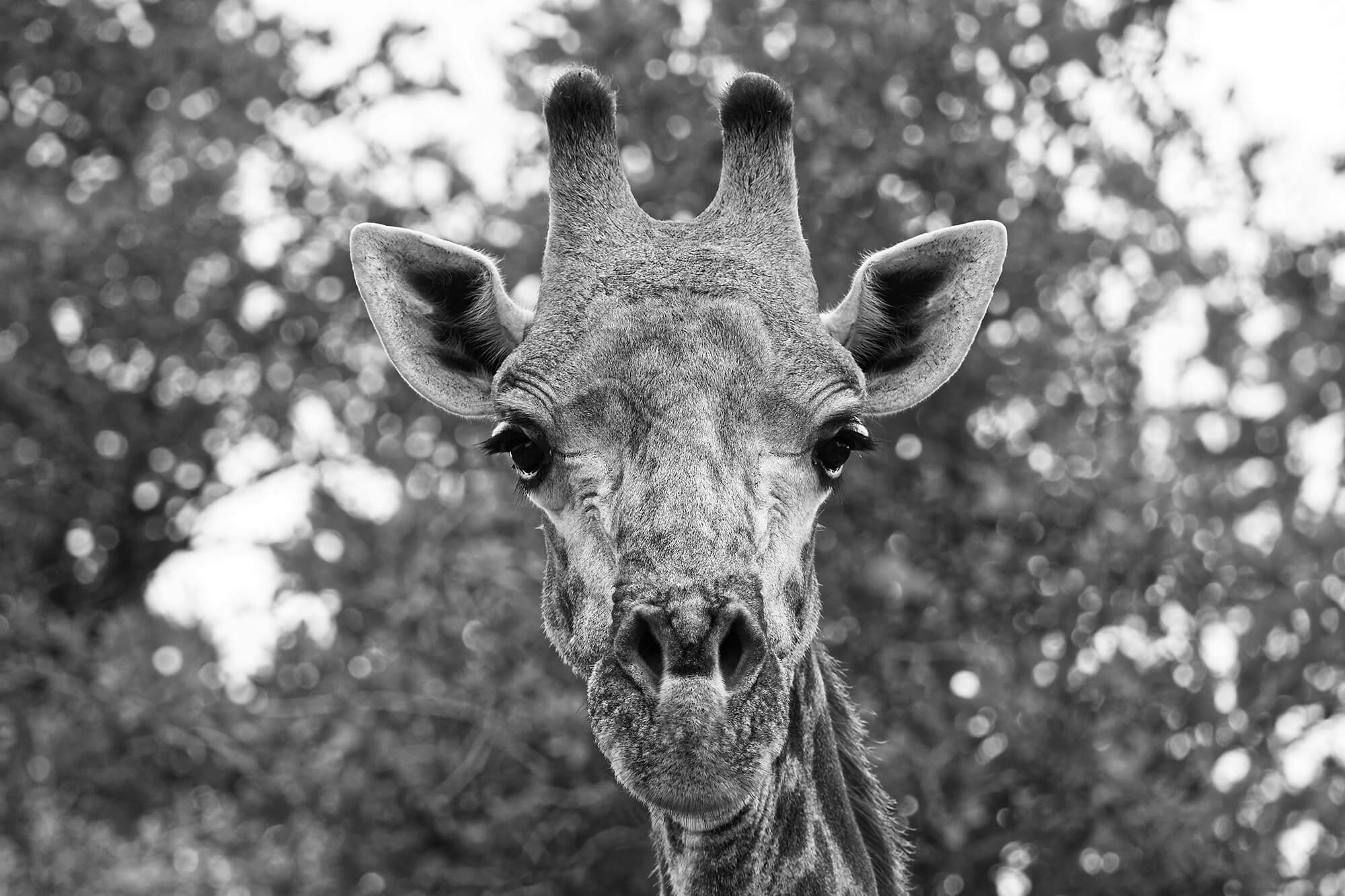 viajes-a-africa-safaris-fotografico-en-botswana
