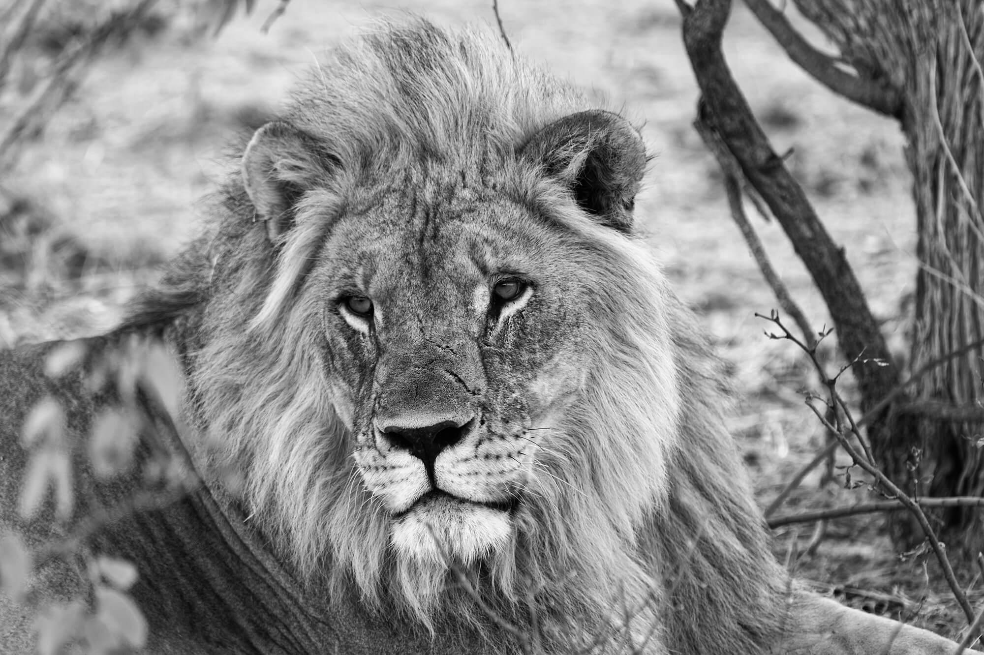 viajes-africa-circuitos-personalizados-en-sudafrica