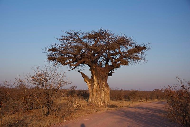 viajes-africa-opniones-de-nuestros-clientes-05