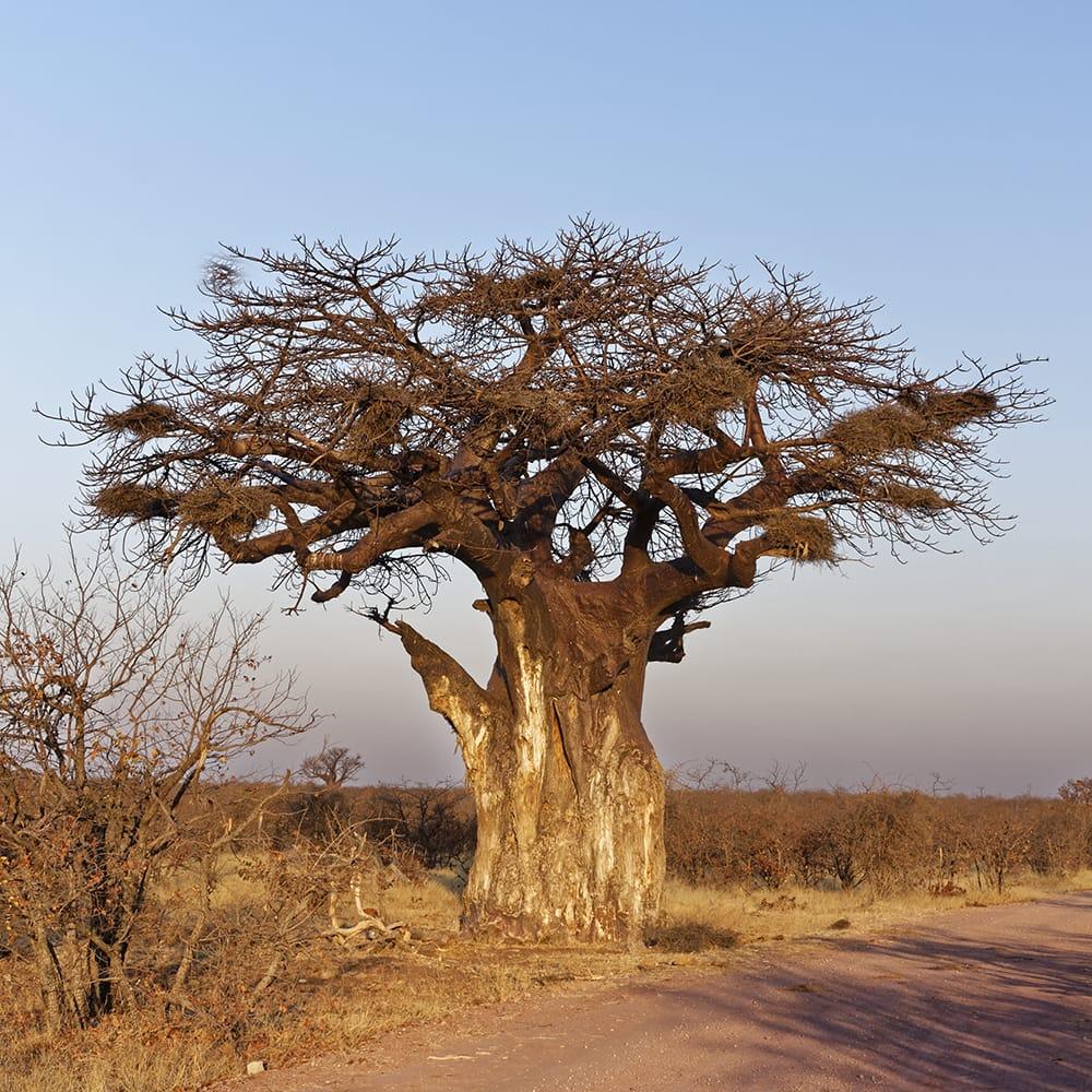 5-viajes africa safari a medida sudafrica