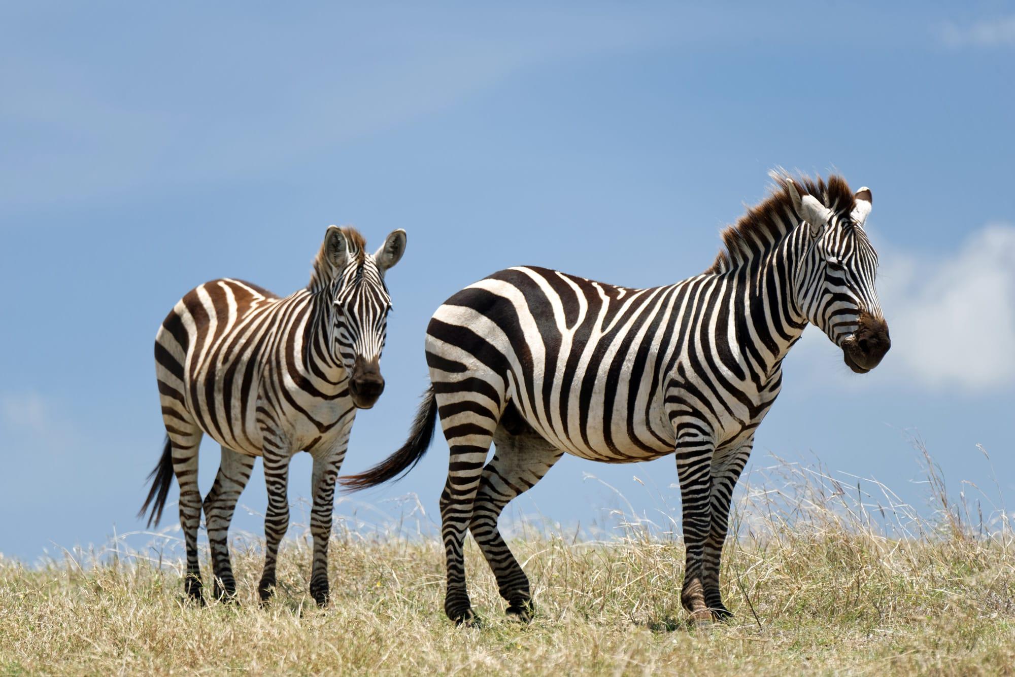 viajes-a-africa-tanzania-safari-a-medida